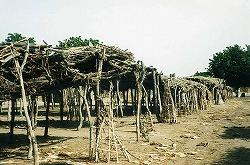 トゥルバ市場植栽1995.jpg