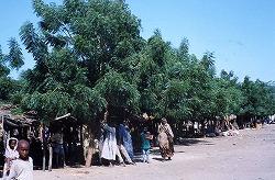 トゥルバ市場植栽2000.jpg