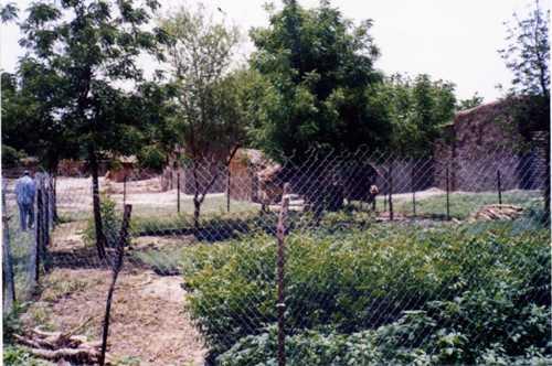 トゥルバ育苗所2002-002.jpg