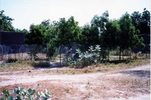 トゥルバ育苗所1999-001.jpg