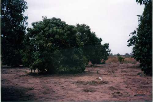 果樹園2003-001.jpg