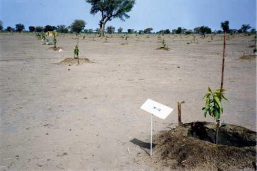 果樹園1992-001.jpg