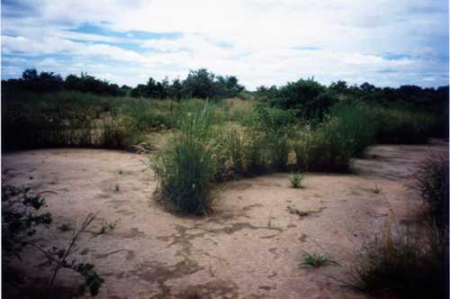 荒廃地回復2000-001.jpg