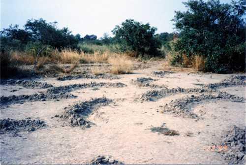 荒廃地回復1999-001.jpg