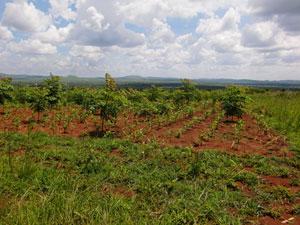 緑のサヘルの活動 国内 チャド共和国 ブルキナファソ タンザニア連合共... タンザニア連合共和